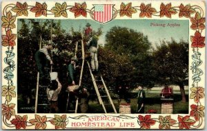 1908 Farming Agriculture Postcard AMERICAN HOMESTEAD LIFE - Picking Apples