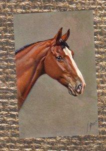 Bay Horse Vtg Postcard Head Study Portrait, Signed By Artist