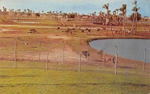 The African Veld at Busch Gardens Tampa, Florida