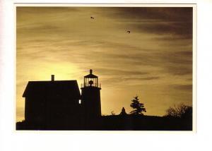 Silhouette, Lighthouse and Seagulls  Maine, Photo Ed Elvidge,