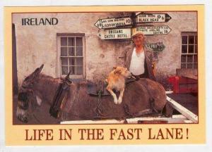 Dog on donkey, Ireland,  Life in the fast lane , 1980s