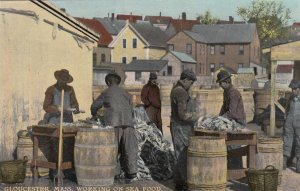 GLOUCESTER , Mass. , 1916 ; Working on Sea Food
