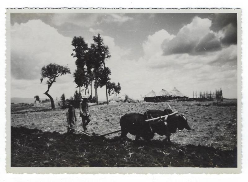 Estimated WW2 Era Real Photo Postcard - Possibly North East Africa - (OO92)