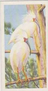 Brooke Bond Tea Vintage Trade Card Wildlife In Danger No 27 Japanese Crested ...