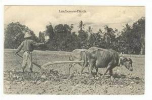 Landbouwer-Djocja, Indonesia, 00-10s