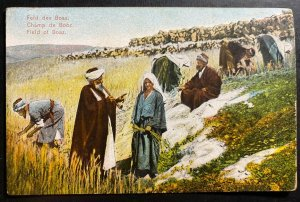 Mint Turkey Color Picture Postcard Field Of Boaz