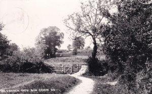 Church Path Bow Devon Old Real Photo Postcard