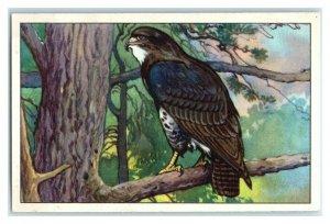 Common Buzzard, German Birds of Prey, Echte Wagner Trade Card *VT31T