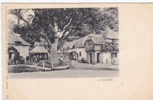 TUCK #1191; BUDLEIGH, Devon, England, United Kingdom, 1910-20s; Majestic Tree...