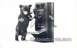 On Telephone Bear Bears Postcard Post Card Old Vintage Antique  On Telephone