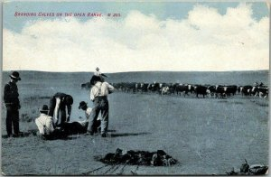 Vintage Ranching / Cowboys Postcard Branding Cattle on the Open Range c1910s