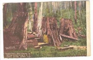 The Cedar Log,Perfectly sound, California,00-10s