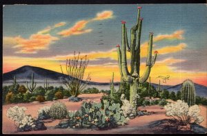 New Mexico Sunset on the Desert showing Variety of Cactus - pm1938 - LINEN