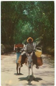 Local transportation through Bamboo Grove, Jamaica, used Postcard