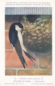 Common House Martin Delichon Urbicum WW2 Rare Bird Postcard