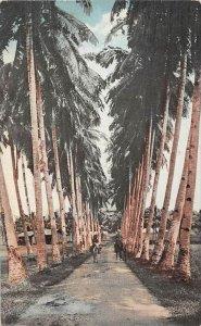 Philippines Manila   Avenue of Palms