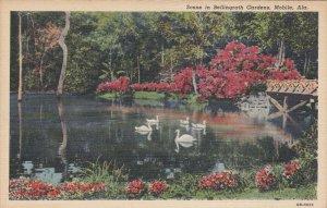 MOBILE, Alabama, PU-1966; Scene In Bellingrath Gardens, Swans