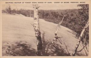 Maine Freeport Showing Section Of Forest Being Buried By Sand