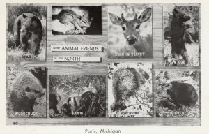 PARIS, Michigan, 1950-60s; Some Animal Friends in the North