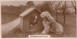 Human In Dog Kennel Dogs Antique German Real Photo Cigarette Card