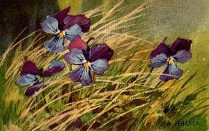 Iris - Artist: A. Haller