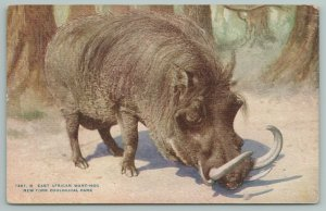 New York Zoological Park~East African Wart Hog~Pig Family c1910 Zoo Postcard