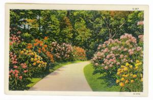 Hillsboro to Deerfield, Illinois 1942 used Linen Greetings Postcard
