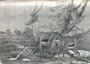 Thomson`s Gazelle & young novelty postcard