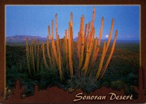 Arizona Sonoran Desert At Sunset Showing Showing Cactus