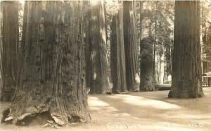 California 1941 Richardson Grove State Park Patterson RPPC real photo 9375