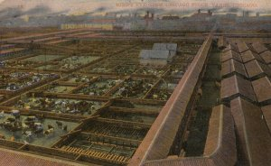 CHICAGO, Illinois, 1910; Bird's Eye View of Union Stock Yards, Cattle pens
