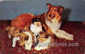 Collie & Pups  Postcard Post Card  Collie & Pups