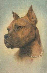 DOG ; Boxer , 1930s