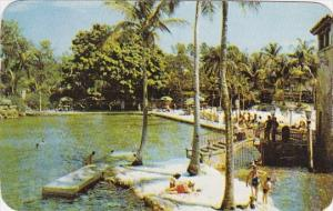 Florida Coral Gables Unique Venetian Pools One Of The Major Attractions In Co...