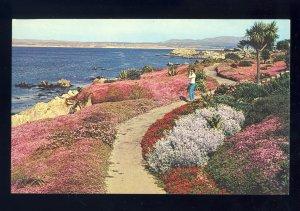 Pacific Grove, California/CA Postcard, Rugged Shoreline Of Monterey Peninsula