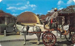 Mexico Merida Yucatan Horse and Buggy at the Park of the Americas