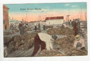 Sorting Sponges, Florida, PU-1914