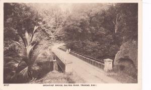 TRINIDAD, 00-10's; Breakfast Bridge, Salybia River