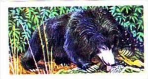Brooke Bond Trade Card Asian Wildlife No 22 Sloth Bear