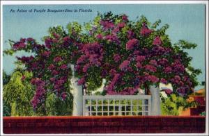 Arbor of Purple Bougainvillea in Fl