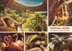 Tropical House Assiniboine Park Zoo Winnipeg Canada
