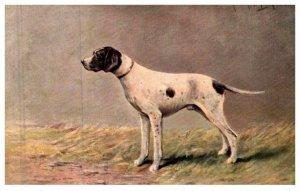 Dog , Pointer