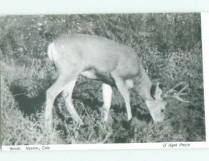 old rppc BABY DEER NAMED BAMBI Meeker Colorado CO i8811