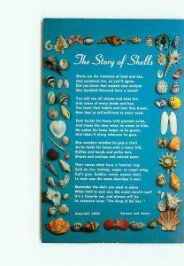 Story of Shells Carman Casey