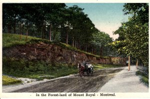 Montreal, Canada - Horse and Buggy in the Forest-Land of Mount Royal - c1918