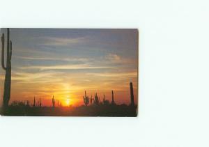 Vintage Postcard Sunset Desert Saguaro Cactus Southwestern Desert # 2944
