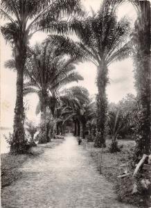 BR56958 gabon allee des Palmes    Africa