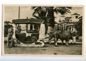 247777 PORTUGAL MADEIRA bullo cart Vintage photo postcard