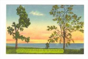 Windblown Cedars, Lake Moultrie, Santree-Cooper, Moncks Corner, South Carolin...