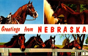 Greetings From Nebraska With Horse